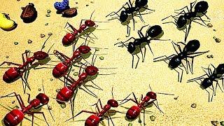 【小熙解说】模拟地下蚁国 蚁穴被各种蚂蚁入侵! 大型蚂蚁战争开启!Empires of the Undergrowth