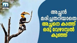 Hornbill Hit By Vehicle; Bird Lovers Feed Female, Birdling   Mathrubhumi News