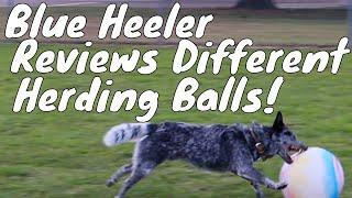 Blue Heeler Reviews Different Herding Balls    Top Herding Balls