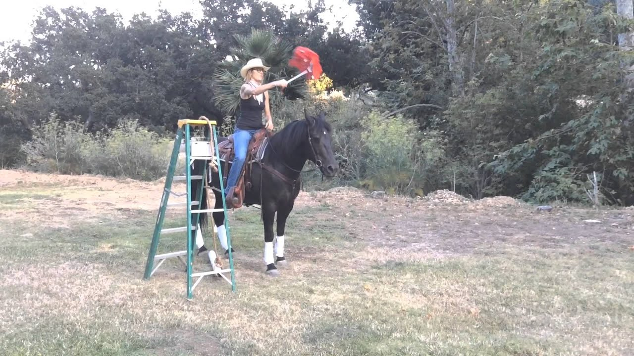 Backyard horse obstacle course for desensitize training