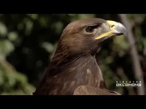 Comanche Nation - SIA