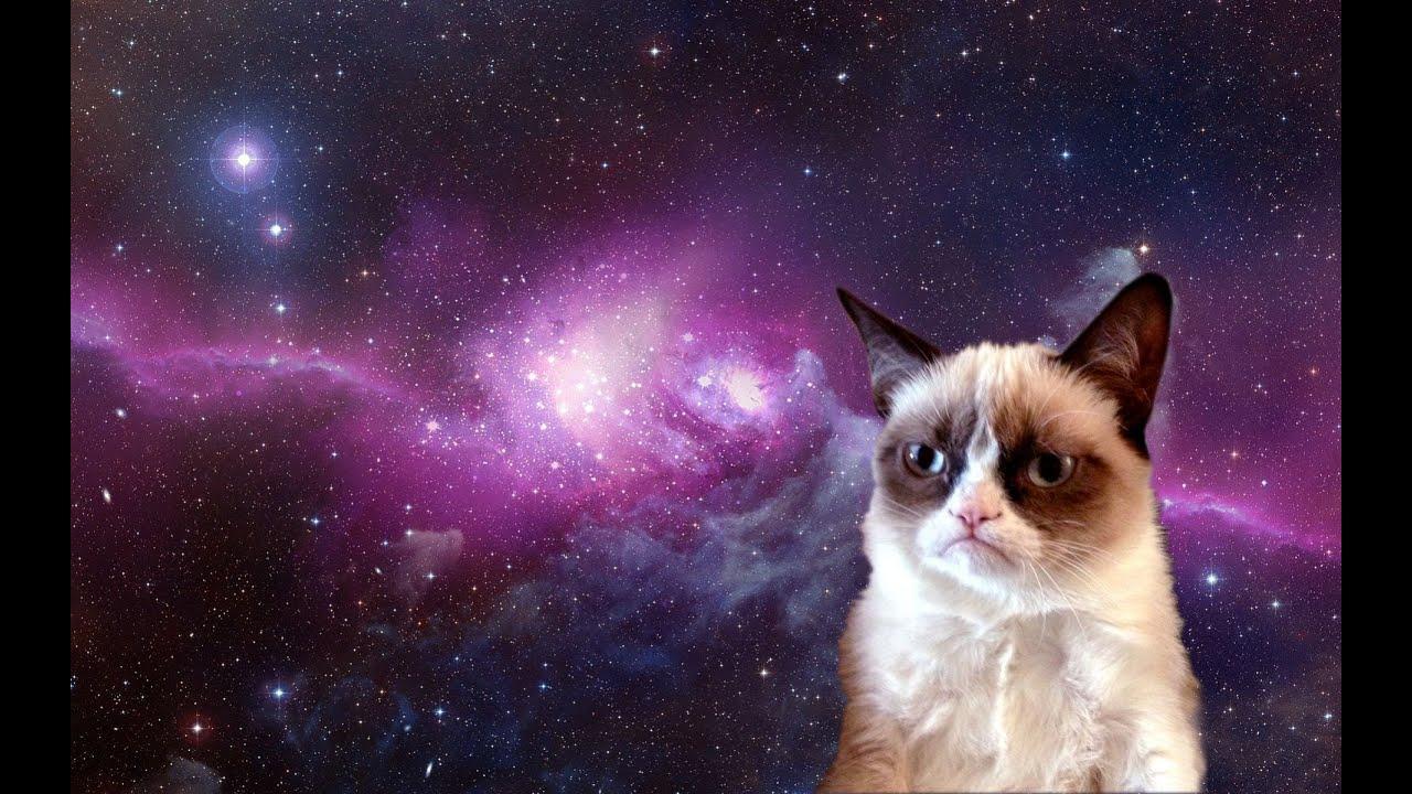 Grumpy Cat Jokes #1