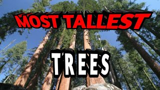 10 of the most Tallest Trees in the World