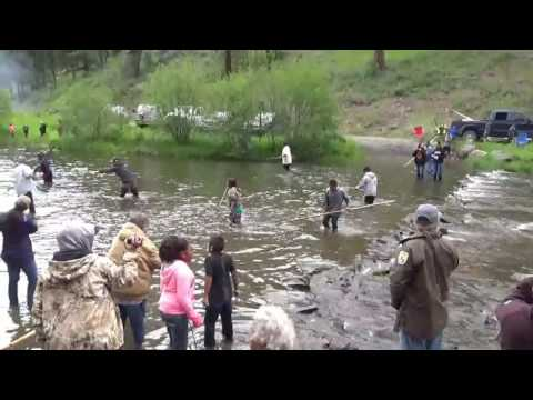 Burns Paiute Tribe 2016 Chinook salmon release