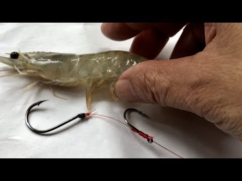 How To Rig Live Shrimp Adjust Hook For Fishing - Thẻo Câu Tráp , Chẽm , Vược