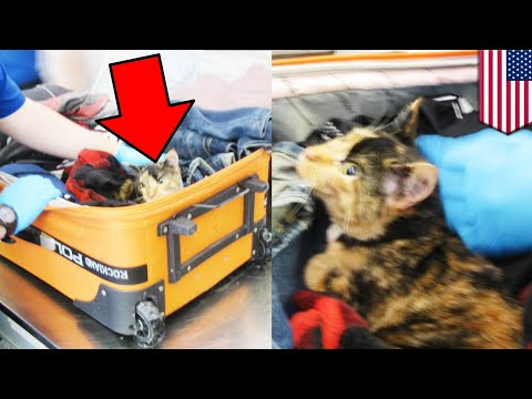 Cat found inside couples' checked luggage by Erie International TSA staff - TomoNews