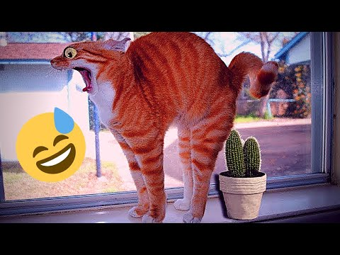 Cute baby cats _ Videos Compilation _ cutest moment of the funniest cats - Soo funny! #6