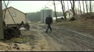 Żubr wchodzi w szkodę w Tucznie