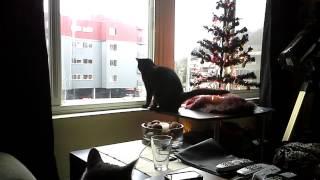 Malcolm Meu watches the birds