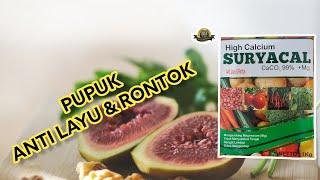 Kalsium tanaman 1kg
