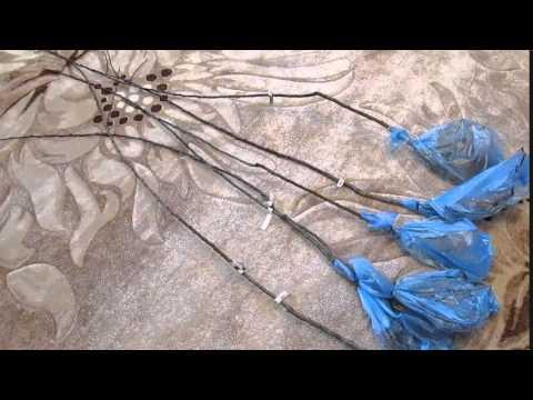 народный способ избавления от глистов остриц