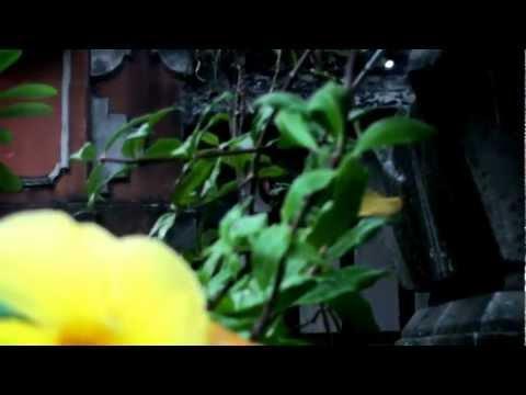 HDR SR12 test - Colorful Garden