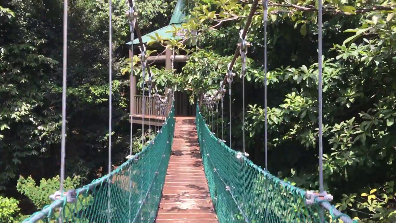 Kuala Lumpur - Bukit Nanas Canopy Walk & Kuala Lumpur - Bukit Nanas Canopy Walk - YouTube