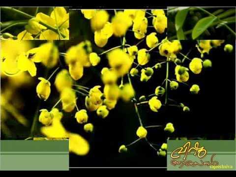 Ente kayil poothirishu greetings free malayalam new year ecards vishu aasamsakalente kayil poothiri m4hsunfo