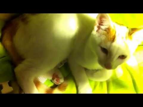 Taz the cat gets feisty with a baby mobile