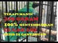 Terapi Mandi Air Garam  Cucak Ijo Didis Langsung Sembuh  Mp3 - Mp4 Download