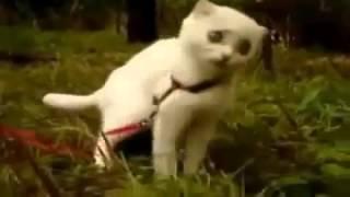 Кот наркоман! Улётное видео!