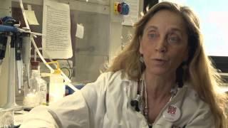 Sclerosi multipla: verso nuove terapie rimielinizzanti
