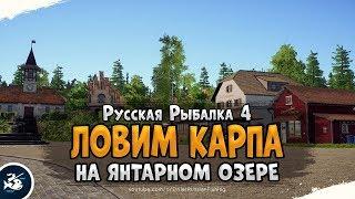 Ловим Карпов на Янтарном озере Русская Рыбалка 4