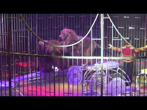 Открытие фестиваля на Вернадского 12.09.2019. Программа А-2. Фестиваль циркового искусства