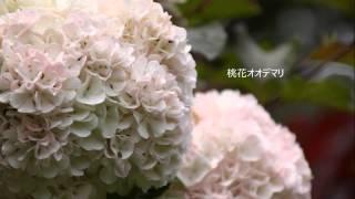 初夏に咲く小さな花たち(北山緑化植物園にて)
