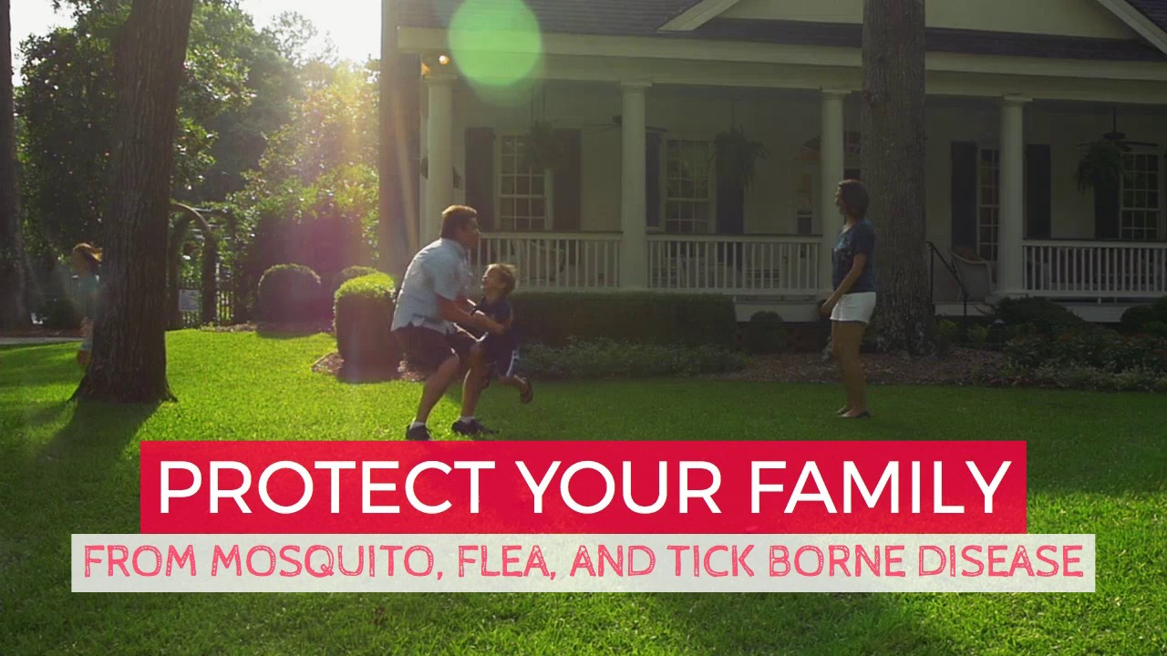 mosquito control charlotte nc youtube