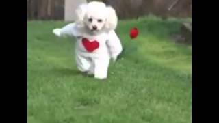 Любовь к собаком