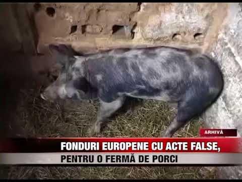 Fonduri europene cu acte false, pentru o fermă de porci