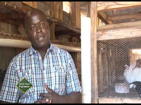 Cashing It Big From Rabbit Business - Shadrack Mwendwa Part 1
