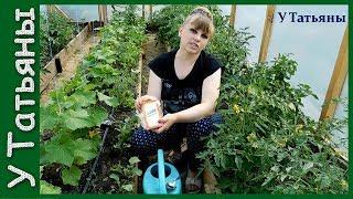 видео Удобрение для огурцов и помидоров (томатов): в теплице, открытом грунте