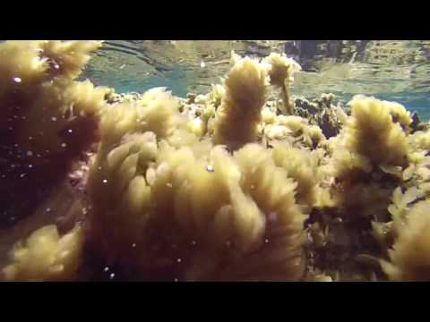 Underwater - The sea of Rhodes (Greece)