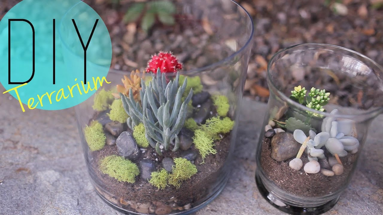 diy indoor garden - cactus terrarium {how to}anneorshine - youtube