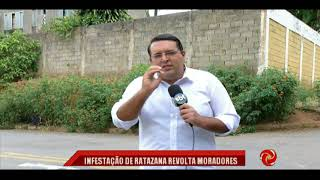 Flagrante de infestação de ratazana em Varginha