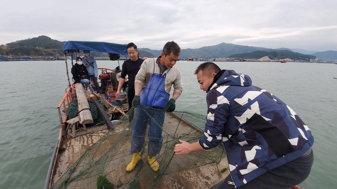 海参养殖区物产太丰富了,几个地笼就收获一桶螃蟹,还有两斤海参