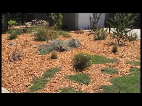 dry landscape ideas starting