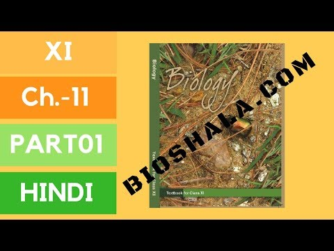 Chapter 11: Transport in plants (HINDI/NCERT level) part 01 thumbnail