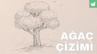 Ağaç Nasıl Çizilir?