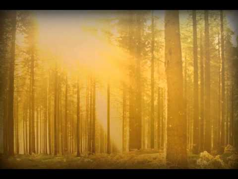 fall forest trees powerpoint video background sharefaith worship resources