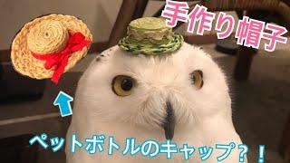 フクロウ達に手作り帽子をかぶってもらった!