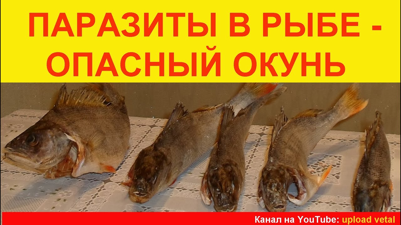 паразиты в рыбе опасные для человека видео