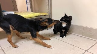 Little Dog Watched Over His Kitten Until They Were Rescued
