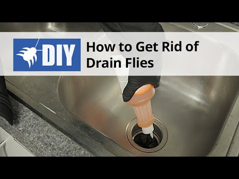 How to get rid of flies in bathroom sink