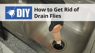 How to Get Rid of Drain Flies - Drain Fly Kit