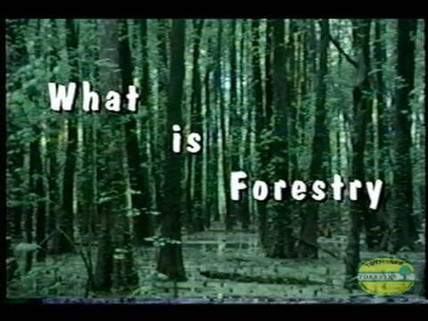 What is Forestry (1991)