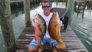 Download Video One Of These FISH Can POISON YOU... Can YOU Guess Which One? (Bahamas Spearfishing+ Catch and Cook) MP3 3GP MP4