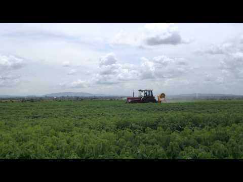 Green Crop Farming Ghana - certified organic spraying with Algifol