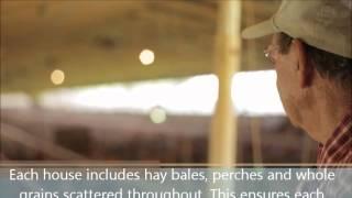 Joyce Farms-Poulet Rouge Farm
