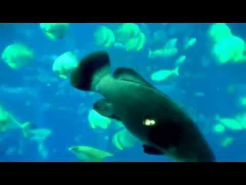 Singapore Aquatic Marine Park, Sentosa Island