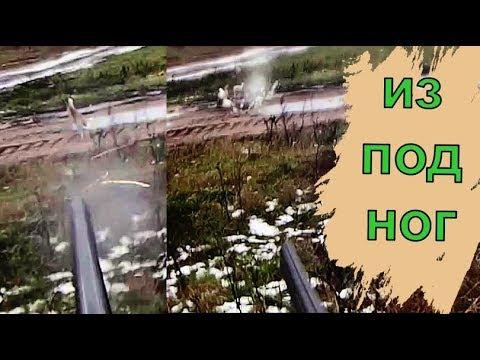 Выскочил ИЗ ПОД НОГ!!УДАР дроби в ЗАЙЦА на ВИДЕО!!Охота на зайца.Hunting A Hare In Belarus.