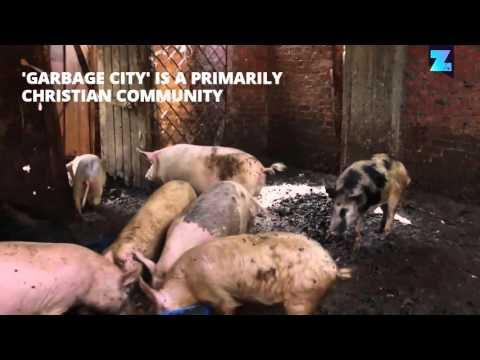 Piggies keeping Cairo's 'Garbage City' clean